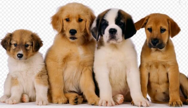 Generalidades de los perros