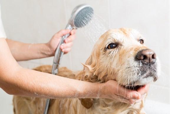 cómo duchar a tu perro