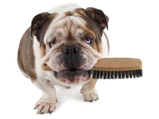 Cepillo de peinar para perros
