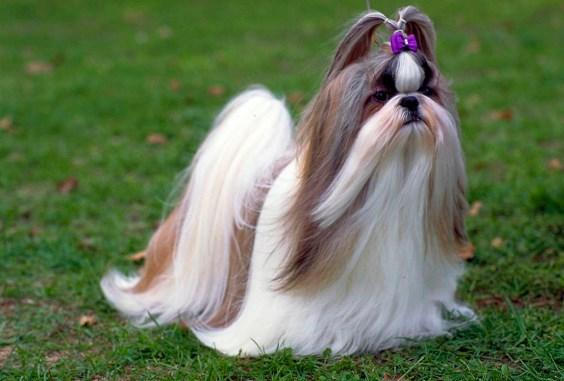 Perros de pelo largo