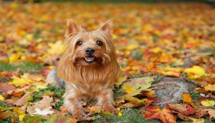Los perros que no crecen son adorables