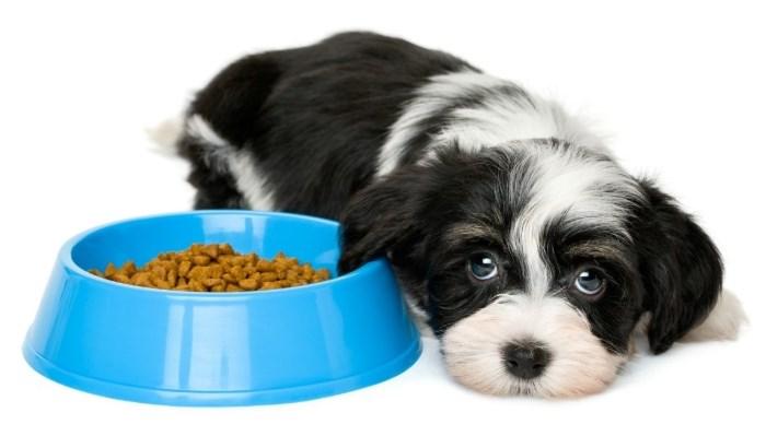 un cachorro abandonado y no quiere comer