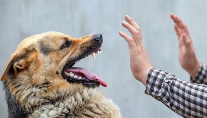 ¿Cómo adopto a un perro peligroso?