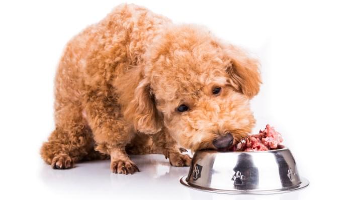 Alimento para perro obeso