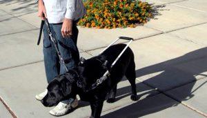perro para ciegos un excelente guía